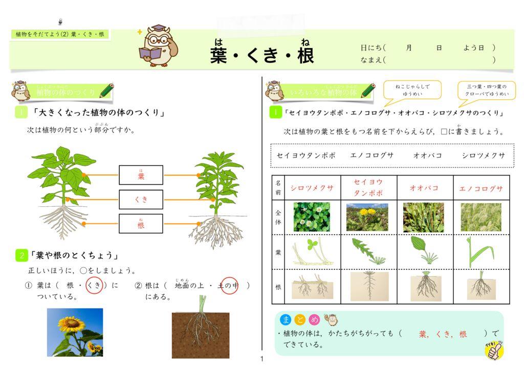 4 植物をそだてよう(2)葉・くき・根kのサムネイル