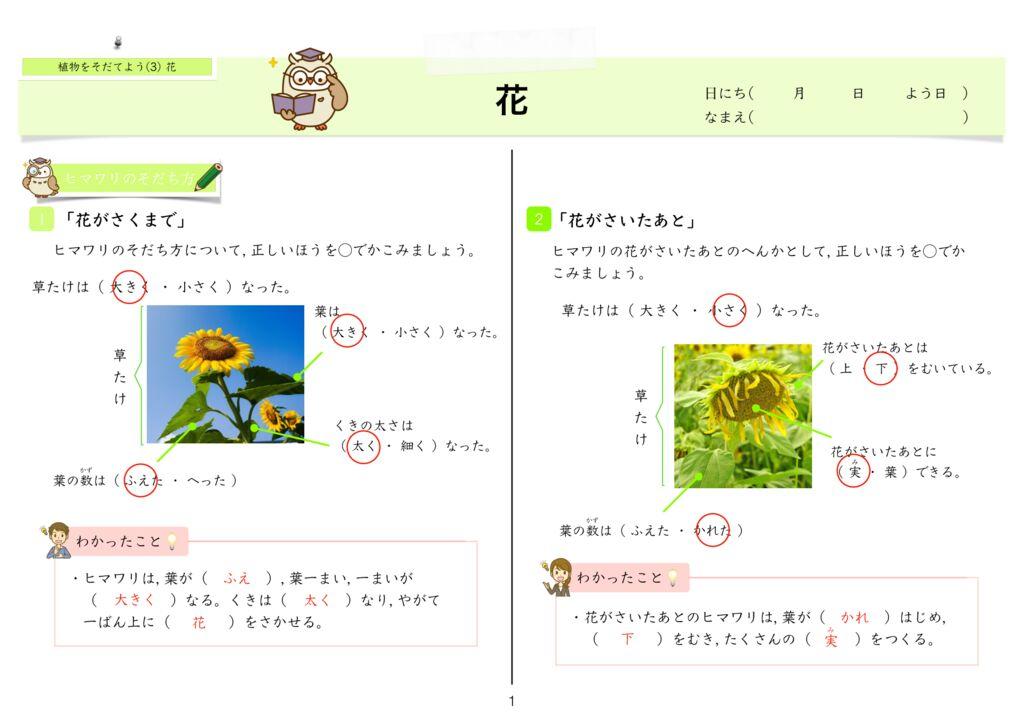 6 植物をそだてよう(3)花k-1のサムネイル