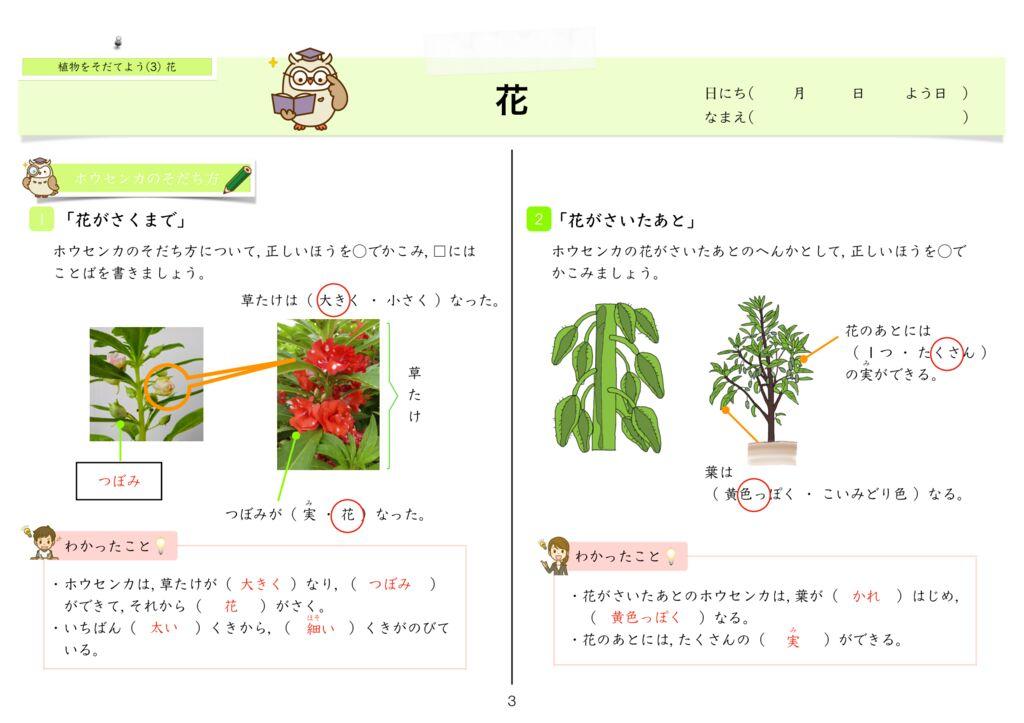 6 植物をそだてよう(3)花k-3のサムネイル