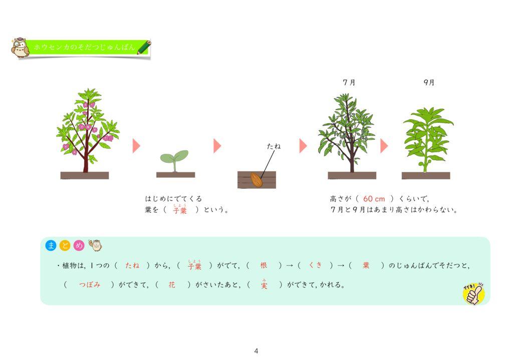 6 植物をそだてよう(3)花k-4のサムネイル