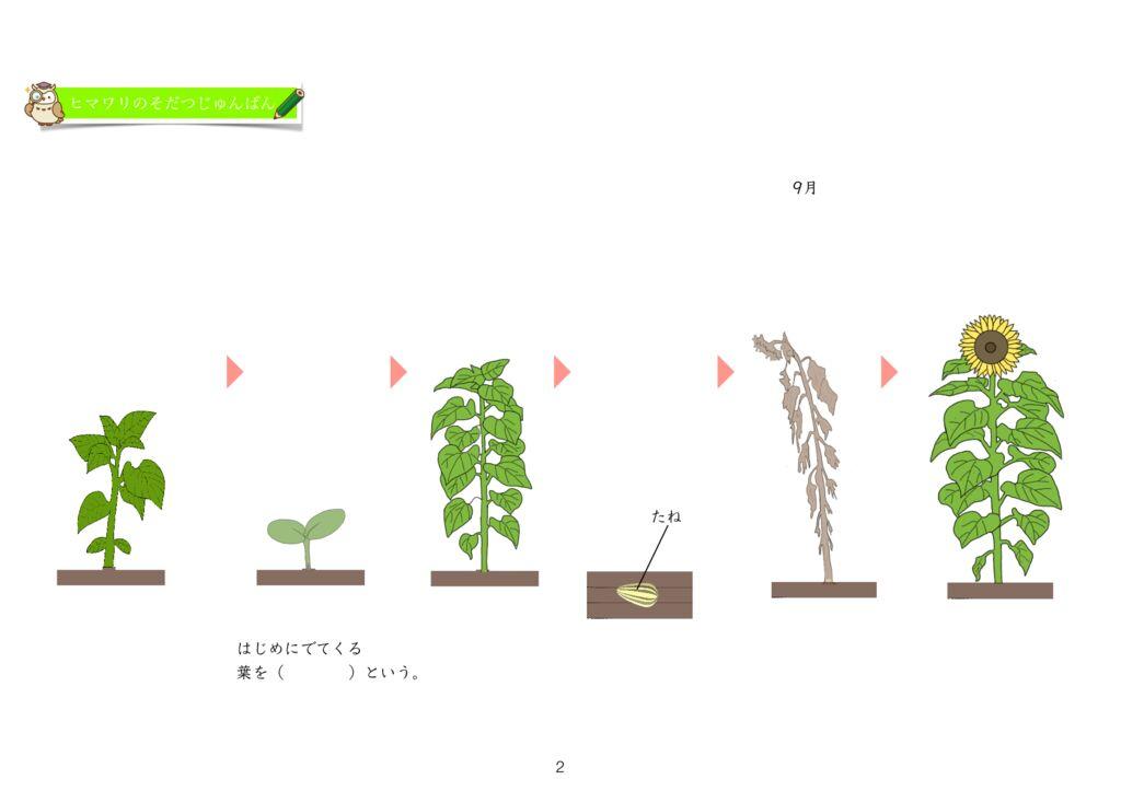 6 植物をそだてよう(3)花m-2のサムネイル