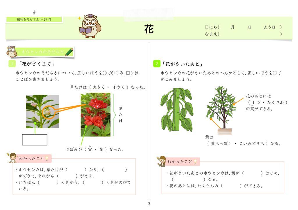 6 植物をそだてよう(3)花m-3のサムネイル