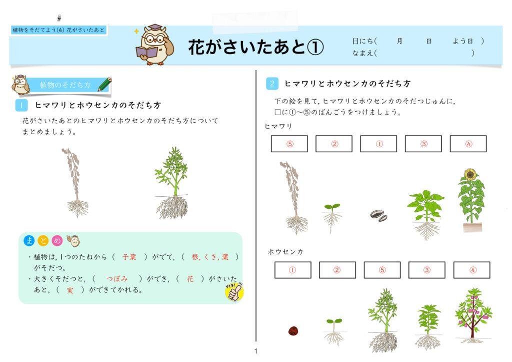 8植物をそだてよう(4) 花がさいたあとk-1のサムネイル
