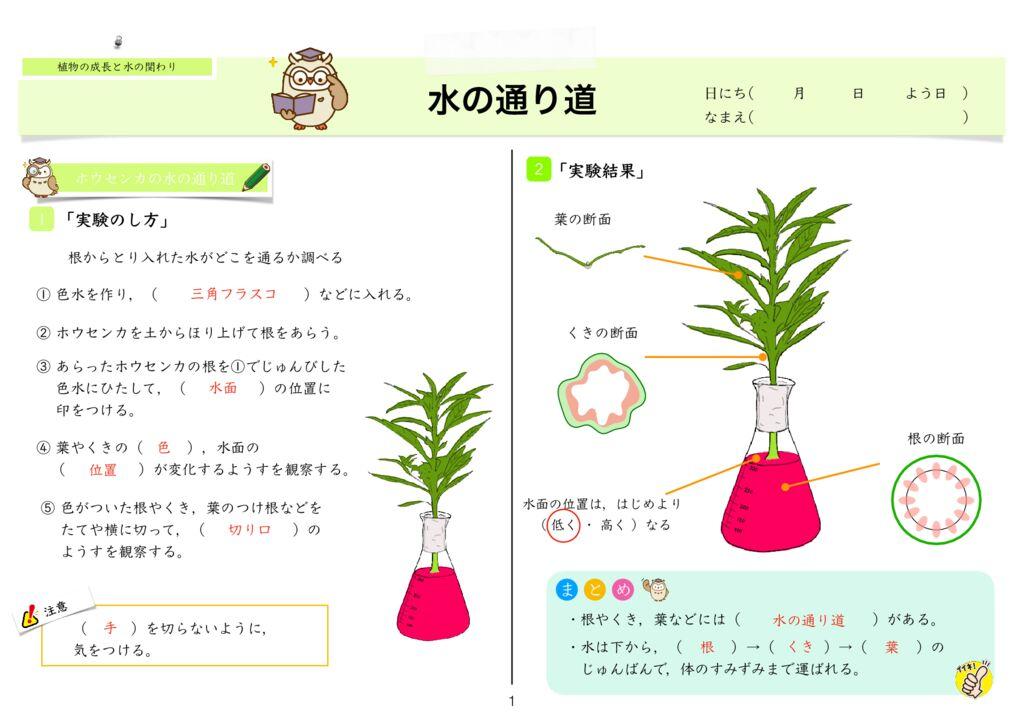 4 植物の成長と水の関わりk-1のサムネイル