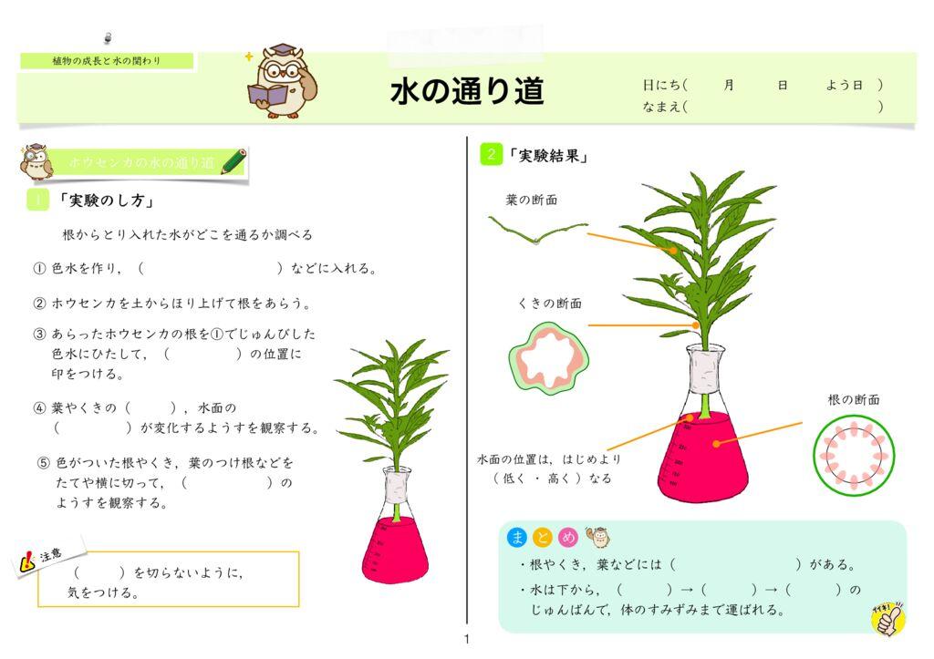 4 植物の成長と水の関わりmのサムネイル