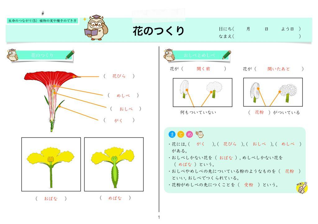 6生命のつながり(5) 植物の実や種子のでき方k-1のサムネイル