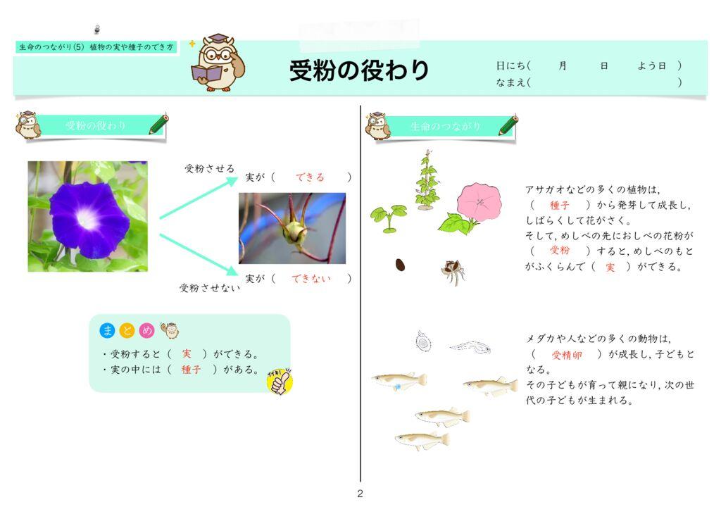 6生命のつながり(5) 植物の実や種子のでき方k-2のサムネイル