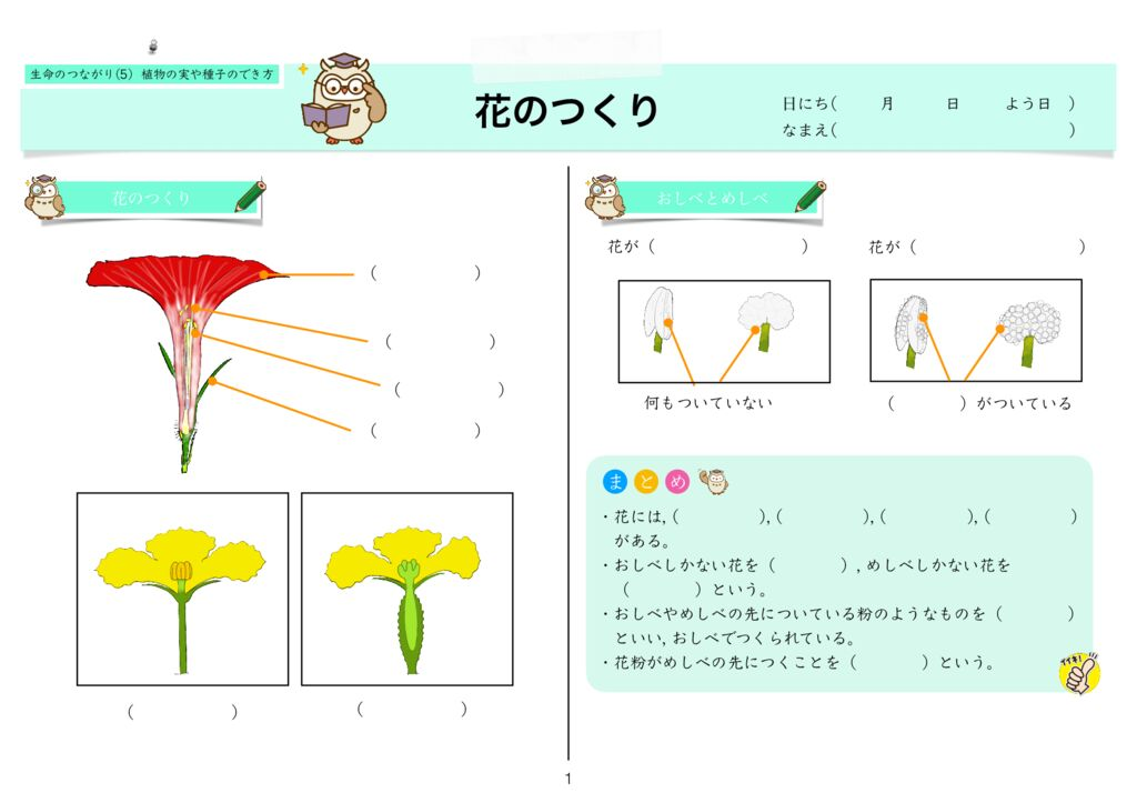 6生命のつながり(5) 植物の実や種子のでき方m-1のサムネイル